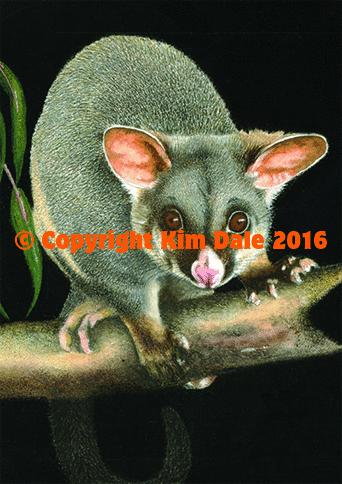 Common Ringtail Possum mit Babys Australien Grußkarte