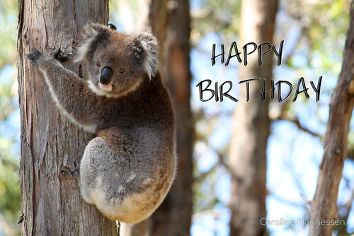 Grusskarte Koala Happy Birthday